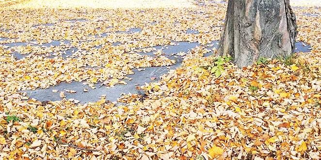أحزانُ الخريف!  … بقلم: المحامي نوري إيشوع